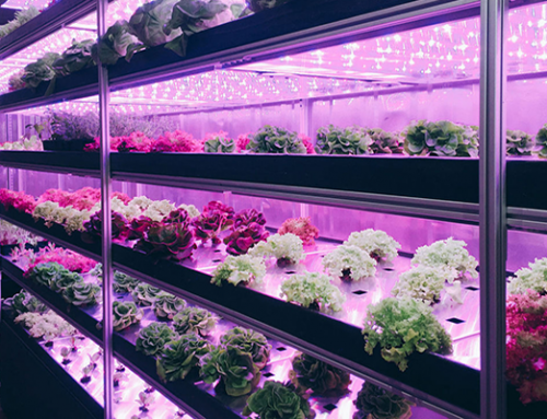 Shipping Container Farm Could Someday Solve the Food Desert Problem