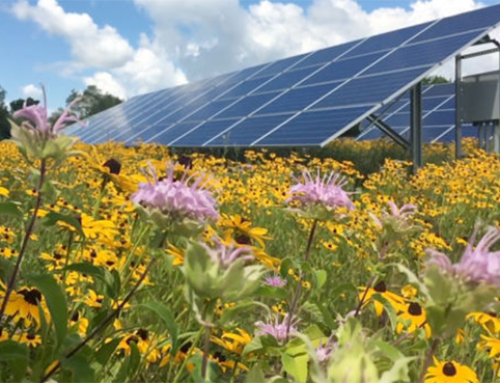 Maryland Paving Way for Commercial Solar Power Plants to Become Pollinator Friendly